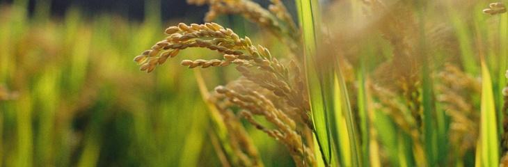 Sécurité alimentaire - Convention internationale pour la protection des végétaux